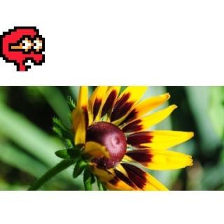 Puzzel nr 1, trudny<br>Wiosenny kwiat
