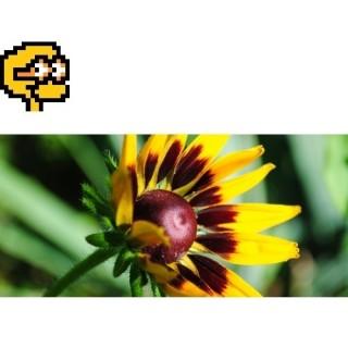 Puzzel nr 1, prosty<br>Wiosenny kwiat