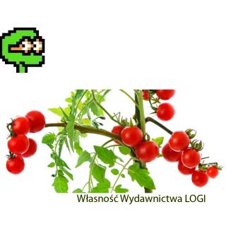 Puzzel nr 2, średni<br>Kto grał w pomidora?